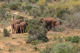 Addo-Nationalpark,Tiere